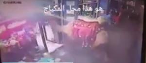 """بالفيديو ..  ناقة تقتحم محلاً لـ""""مستحضرات تجميل"""" في غزة"""