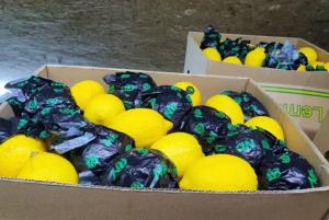 الزراعة تُحقق بدخول شحنة 400 طن ليمون الى الاسواق استوردت من الصين ودخلت الاردن على انها قادمة من جنوب افريقيا