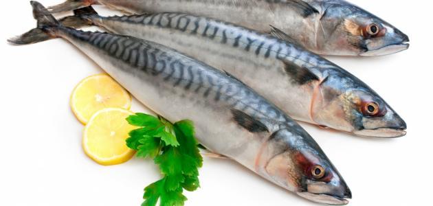 ماذا يعني شراء السمك في المنام