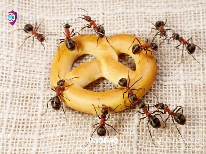 تعرف على حكم استعمال النمل في وصفه طبية