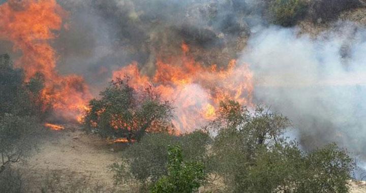 حريق بمشروع تحريج الحسينية في الكرك