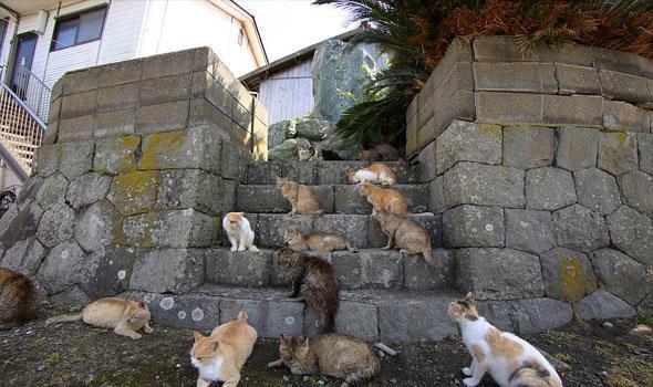 طرد جماعي لعشرات القطط ..  وتحرك عاجل لجمعيات الحيوان