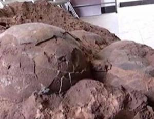 حادثة غريبة  .. خرجوا في نزهة وعادوا ببيض عمره 145 مليون سنة