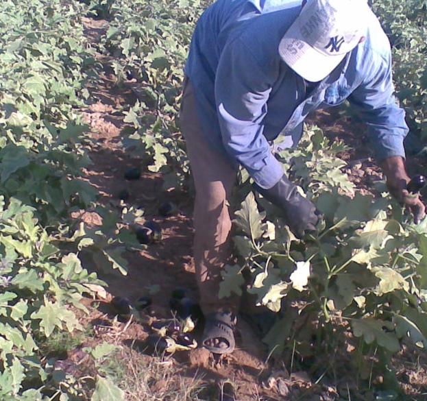 امام وزارة الزراعة