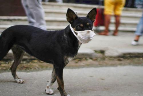مصدر: الصحة تدرس كيفية التعامل مع اول اصابة بكورونا لكلب