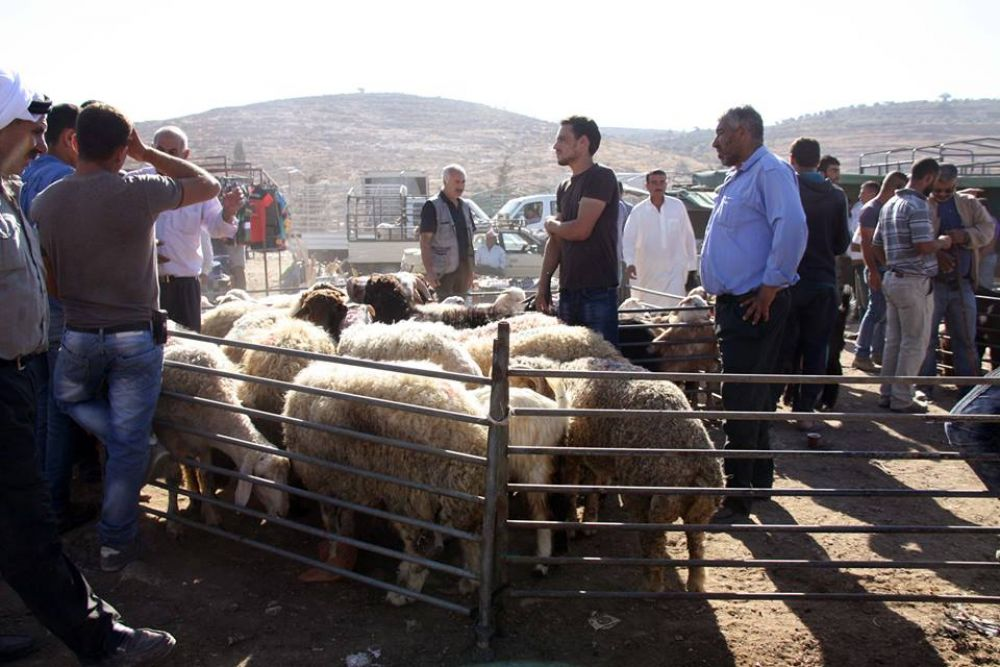 انتكاسة كبيرة يشهدها سوق الأضاحي بالضفة الغربية