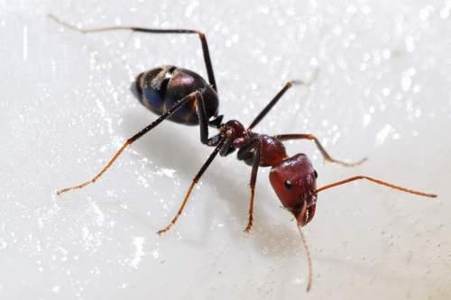 تفسير رؤية النمل في المنام لابن سيرين