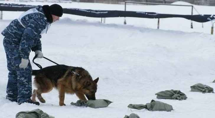 أنف اصطناعي يغني عن الكلاب المدربة