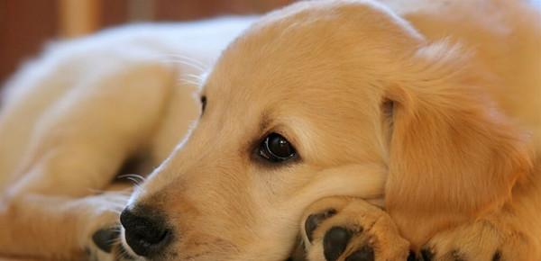 فيديو طريف: كلب يسرق البوظة من الثلاجة أثناء نوم صاحبه