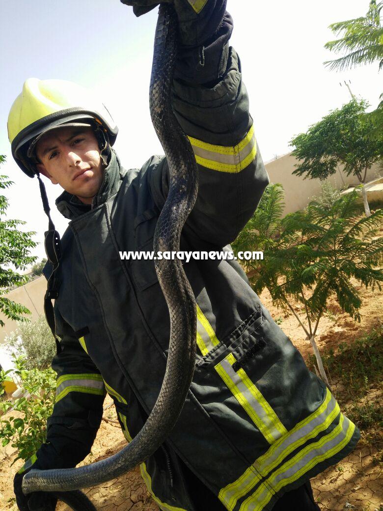بالصور : الدفاع المدني يقتل أفعى طولها متران داخل منزل في المفرق