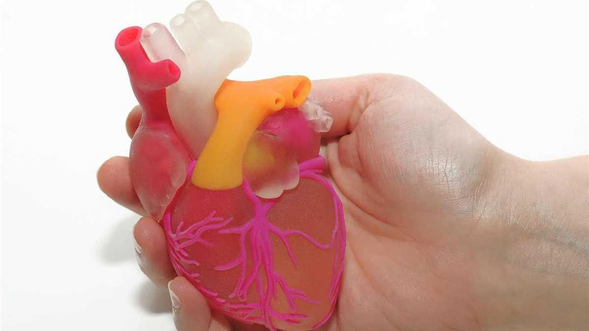 تطوير قلب بشري نابض بالحياة بتقنية ثلاثية الأبعاد (فيديو)