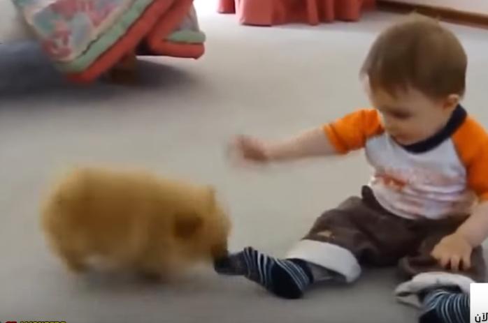اضحك على أجمل مقاطع الأطفال مع الحيوانات