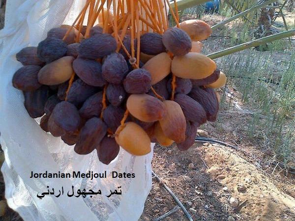جمعية التمور: محاولات متكررة لتشويه صورة المنتج الأردني مع بداية كل موسم رمضاني