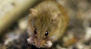 فئران تلتهم فتاة معاقة