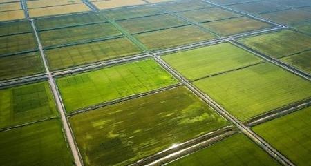 زراعة الأرز بالهاتف .. روبوت صيني ينشر البذور بدقة عالية