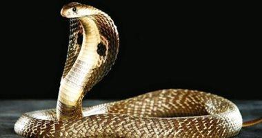 تفسير رؤية الثعابين في المنام