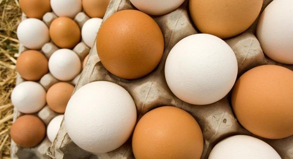 إحالة 14 متورطًا بملف البيض الفاسد إلى القضاء