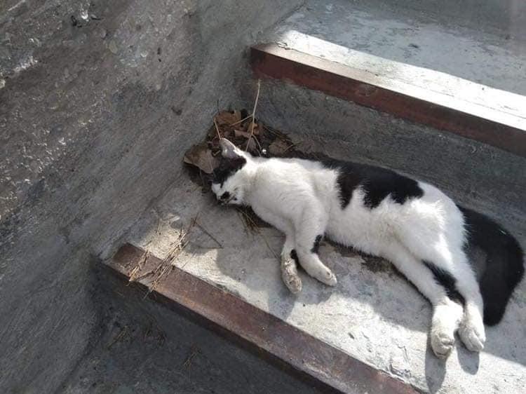 """بالصور .. مجزرة جماعية بحق عدد من القطط في عمان  .. و"""" الامانة والزراعة"""": ليس لنا علاقة بعملية تسميم القطط"""