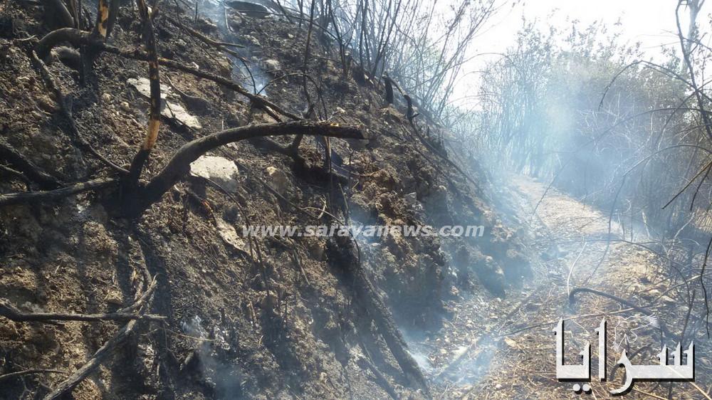 بالفيديو والصور .. حريق كبير يأتي على (20) دونما من الاشجار المثمرة في ماحص