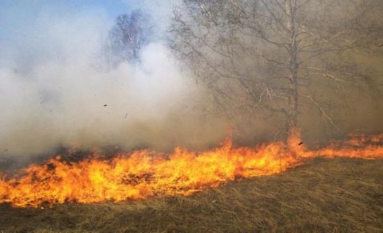 بالفيديو  ..  حريق اعشاب هائل في منطقة شفا بدران