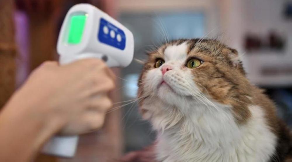 لجنة الأوبئة : اصابة بعض الحيوانات بالكورونا لا تعتبر مصدرا كبيرا لانتقال العدوى للانسان