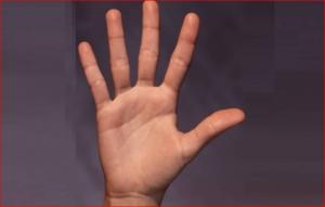 أخيراً.. العلماء يكتشفون لماذا نملك 5 أصابع وليس 6؟!