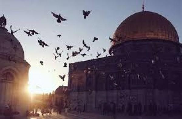 مذكرة نيابية تطالب ببث خطبة صلاة الجمعة من المسجد الأقصى