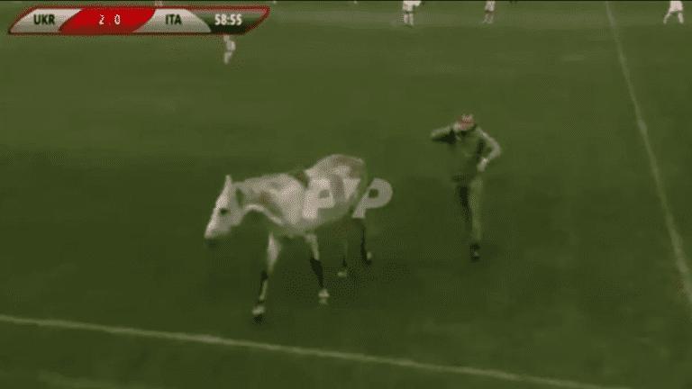 حيوانات تقتحم ملعبا وتوقف مباراة بين إيطاليا وأوكرانيا - فيديو
