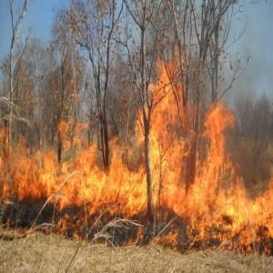 تحذيرات بيئية من حرائق الغابات في عجلون