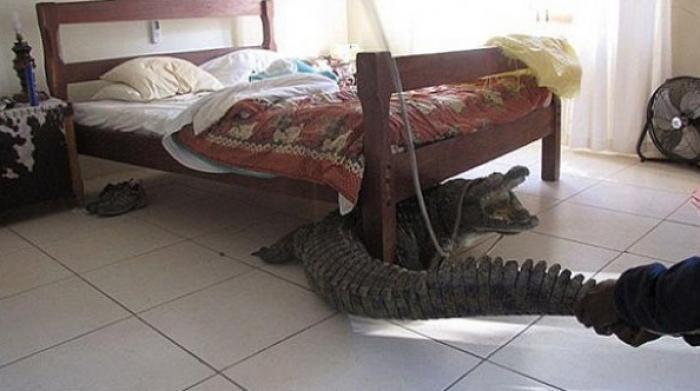 بالصور: تمساح وجثة ومليون دولار