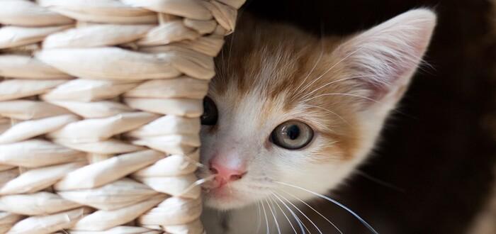 """معاني """"حلم ضرب القطط """" في المنام"""