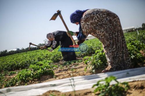 6% من حيازات الأردن الزراعية تمتلكها سيدات