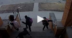 بالفيديو .. مشاهد تحبس الانفاس  .. كلب شرس يطارد أطفال مدرسة في شيكاغو