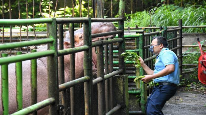 حديقة إندونيسية قد تضطر لذبح حيوانات لإطعام أخرى