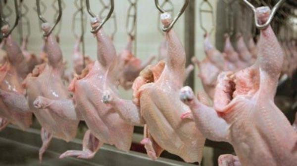 الحاج توفيق: دجاج عين الباشا الفاسد مصدره مصنع محلي كبير