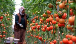 انخفاض أسعار المنتجين الزراعيين 15.5%