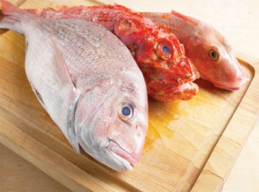 انخفاض مستوردات الأردن من الأسماك