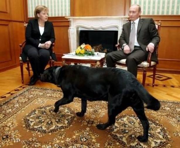 كلب بوتين أنقذه من الاغتيال 3 مرات ويشم القهوة والشاي والطعام قبل أن يأكله أو يشربه