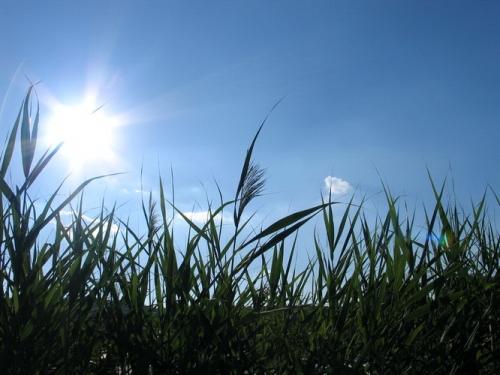 الخميس .. انخفاض قليل على الحرارة مع بقاء الأجواء حارة