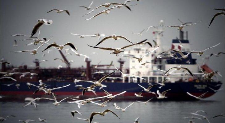 دراسة ..  مراقبة الطيور تسعد البشر أكثر من المال