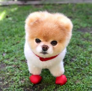 الحزن يقتل ألطف كلب في العالم