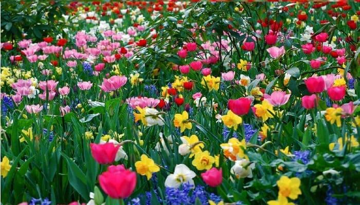 تفسير رؤية الربيع في المنام