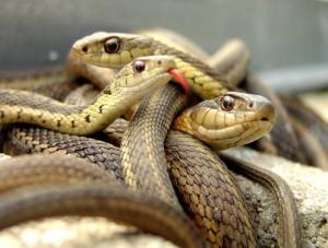 هل تعلمون كم تقتل الثعابين من البشر سنوياً؟