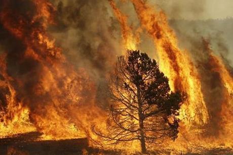 جرش ..  40 حريقا في الغابات ألحقت أضرارا بأراضي المزارعين