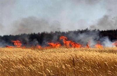 حريق يأتي على 20 دونما من الشعير في ارميمين