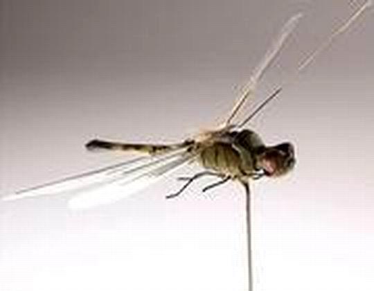 الرمثا : مطالب بحملات رش لمكافحة الذباب والبعوض