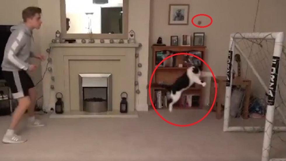 """شاهد ..  قطة تتقمص دور """"الحارس"""" وتتصدى لأكثر من 10 تسديدات (فيديو)"""