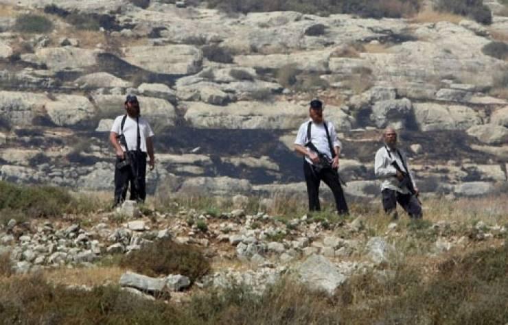بالفيديو  ..  مستوطنون يهاجمون فعالية لزراعة أشجار الزيتون في نابلس