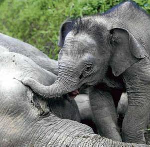 بالصور .. عندما يذرف الفيل دموعه حزناً على فراق امه