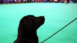 كلب على لائحة شرف جامعة إسبانية